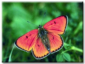 3butterfly.jpg