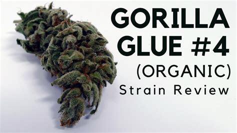Gorilla Glue #4 Cannabis Strain Information & Review