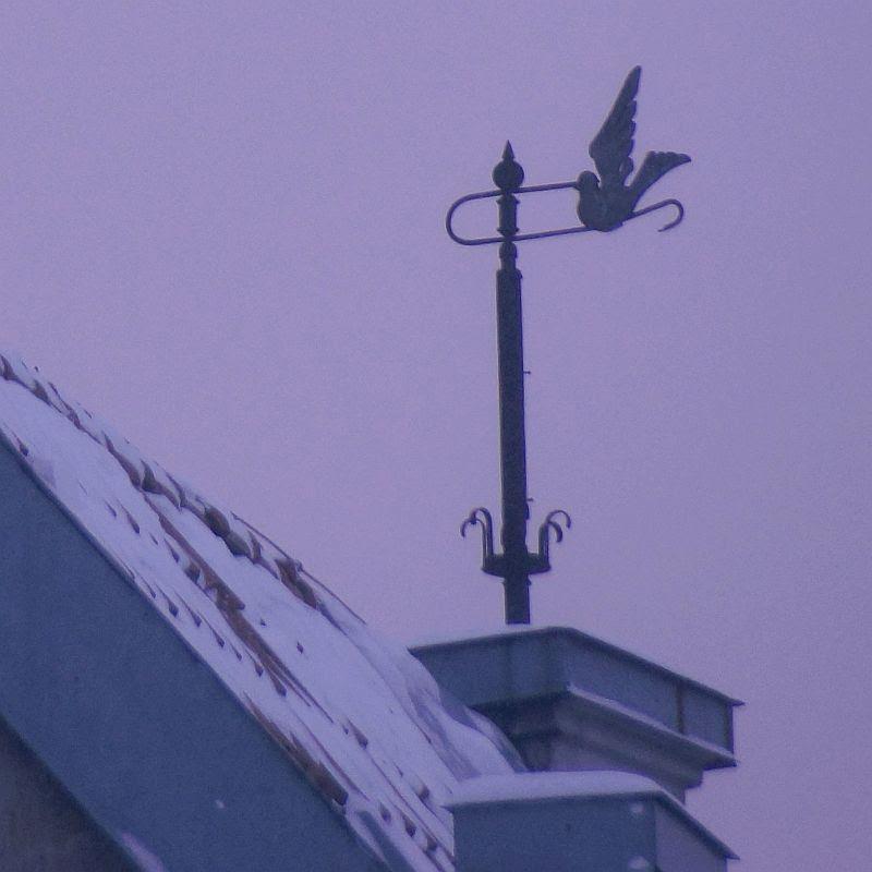 20 Bird DSC08307.jpg