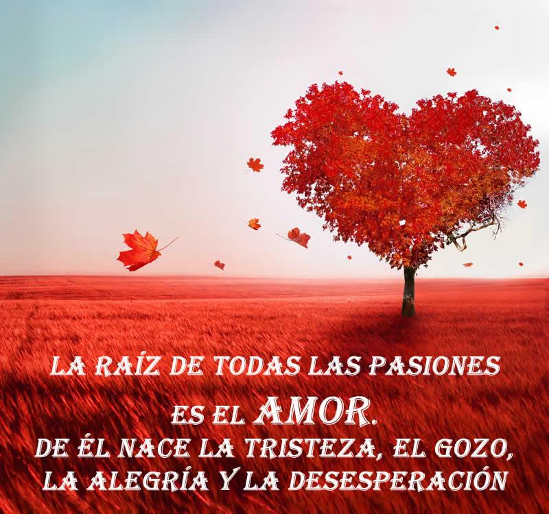 1001 Imagenes De Amor Fotos Romanticas Con Frases Para Ti
