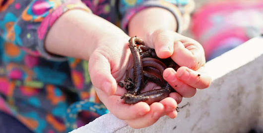 How to Create a Wormery with Kids and Teach them About Worms