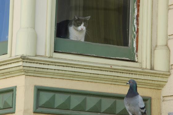 cat&pigeon-560.jpg