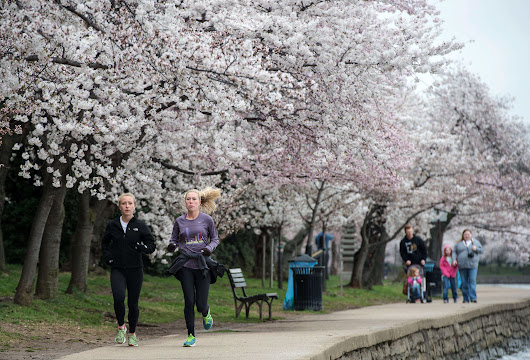 Running for Office? Washington DC Is the Fittest US City