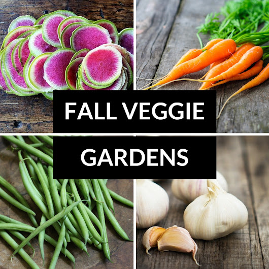Fall Vegetable Gardens – What to Plant Now