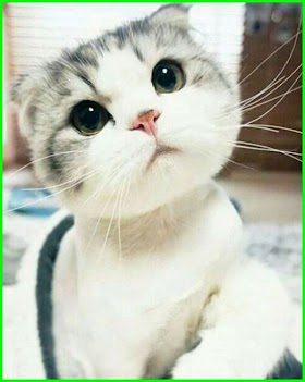 Kucing Lucu Foto