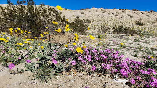 01-25-2019 A Day or Two in the Desert