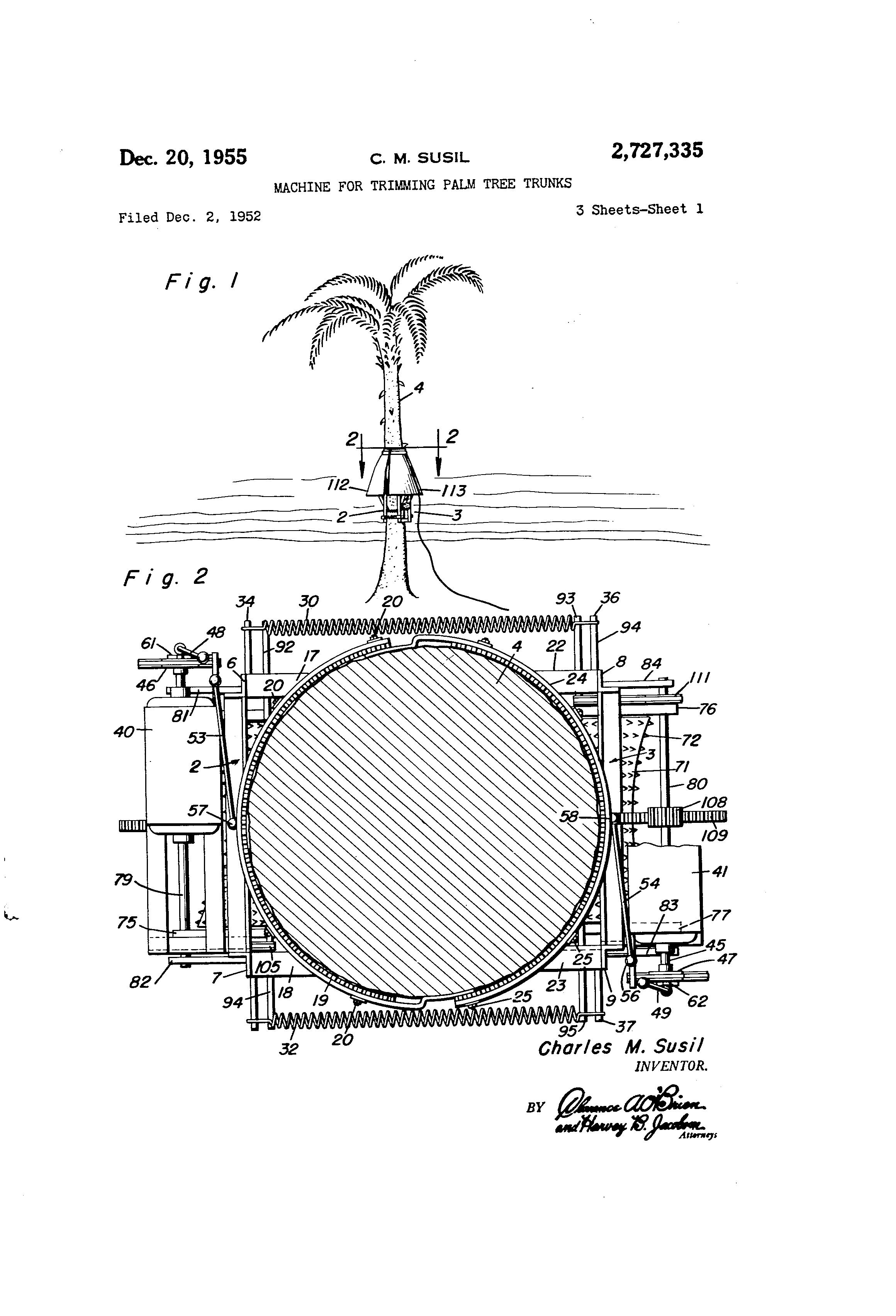 Palm Tree Diagram