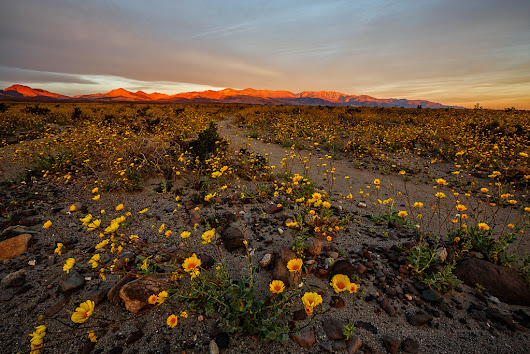 Death Valley Super Bloom Sunrise