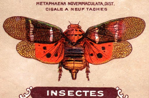 insecte 24