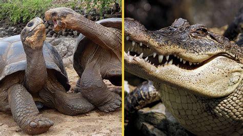 top  animales prehistoricos  aun existen youtube