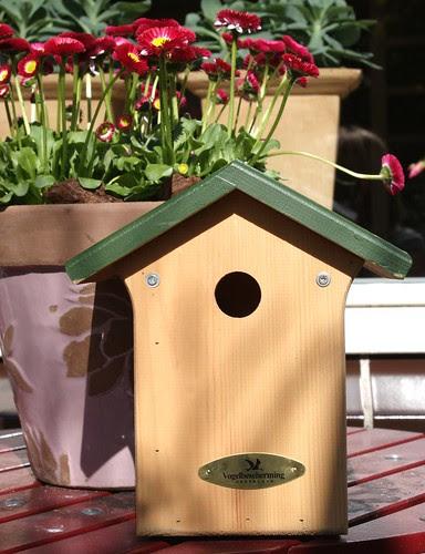 new bird house