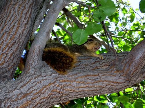 Devious Squirrel