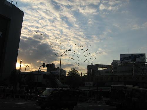 Birds flying over Takadanobaba