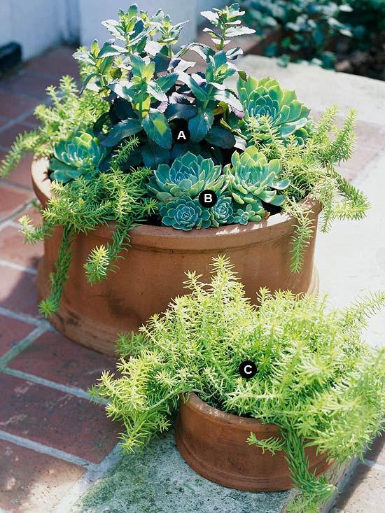 Terra-cotta succulent containers