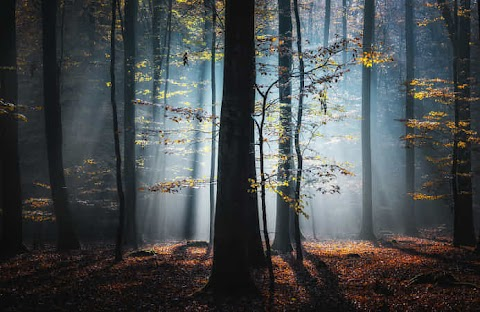 Forest Light by Carsten Meyerdierks