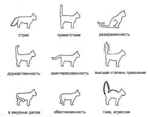 Как понимать кота