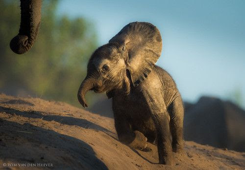 Help Mom…! by Wim van den Heever