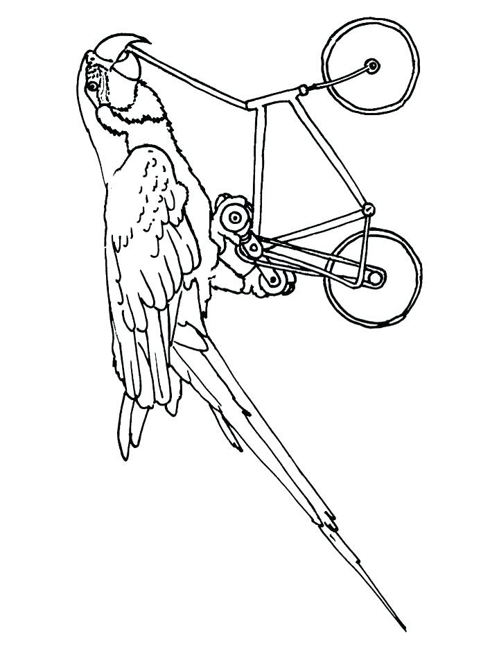 Scarlet Macaw Coloring Page