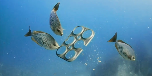 Brewery Creates Edible Six-Pack Rings that Feed, Rather Than Kill, Marine Life