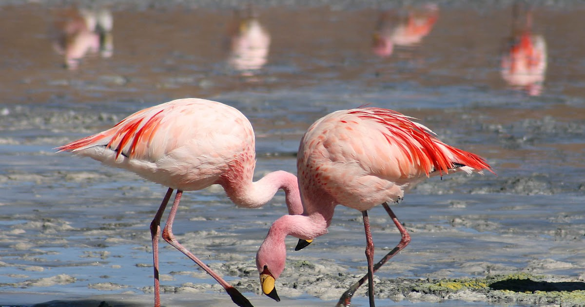 """analysis on materialism and pink flamingo essay Ap language rhetorical analysis in jennifer price's critical essay, """"the plastic pink flamingo: a natural history,"""" she assesses the irony in the popularity of the iconic plastic flamingo in."""