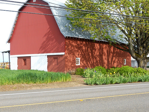 Red Barn with irises
