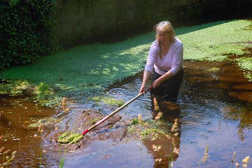Manda in the Sheepdip Pond