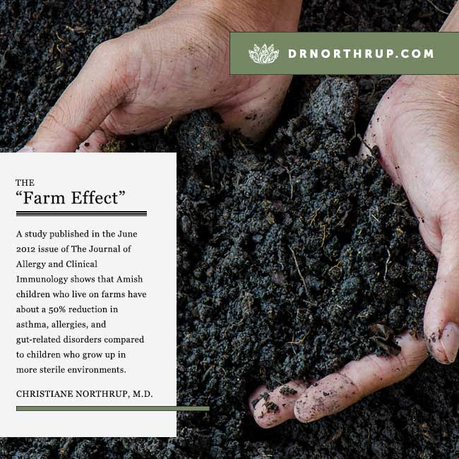 The Farm Effect: How Dirt Makes Us Happy and Healthy by Christiane Northrup, M.D. #immune #system #kids