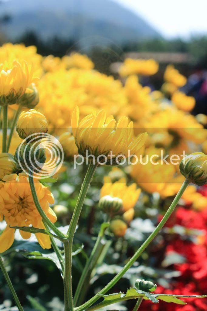 photo IMG_9125-2_zps44b40f93.jpg