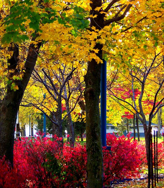 Autumn's Glory