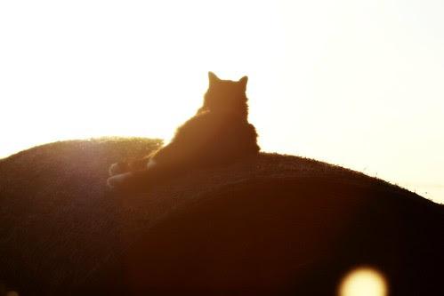 miss kitty1