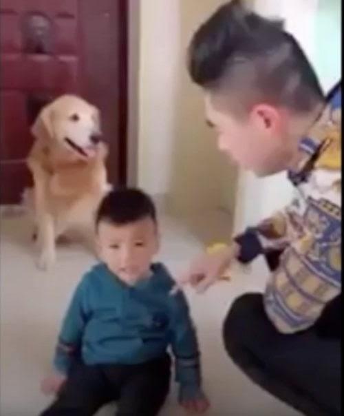 Defiende a su niño favorito de todos los peligros, hasta de la reprimenda de papá