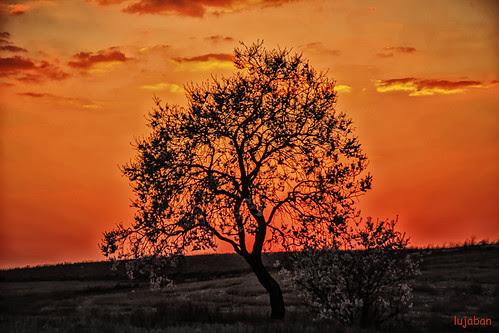 Tree at sunset... by lujaban