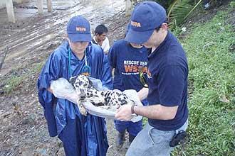 Cão é resgatado durante enchente ocorrida na Costa Rica em 2008