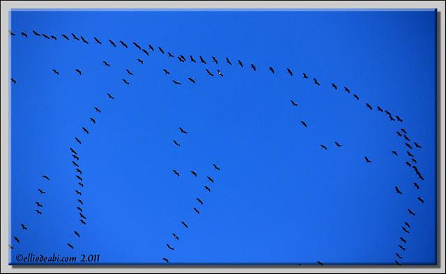 1 migración de grullas
