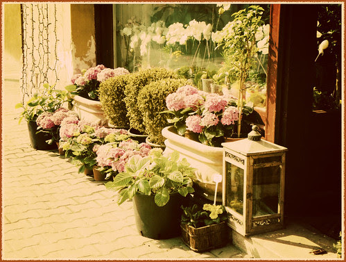flowers for the passers-by