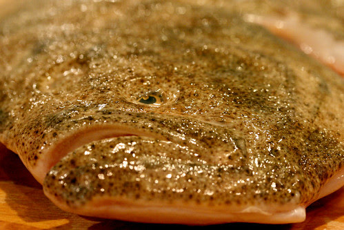 Turbot face