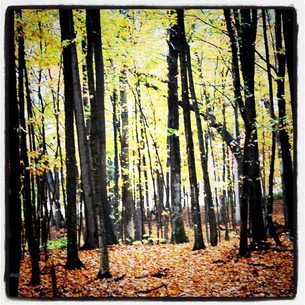 Instagram - forrest in fall