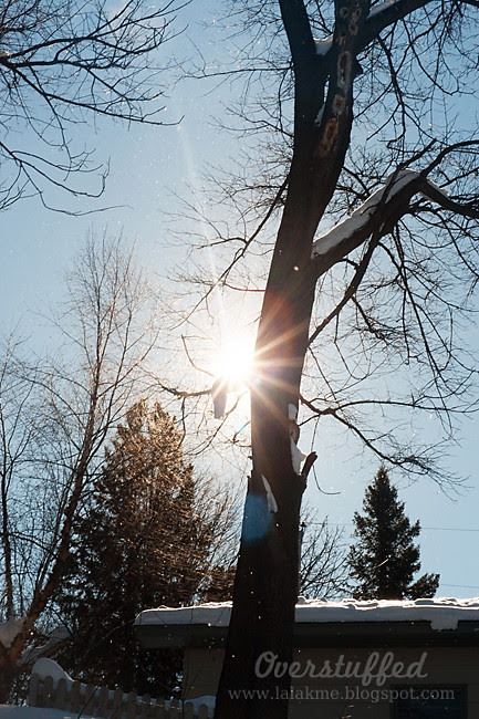IMG_7415 winter sunflare web