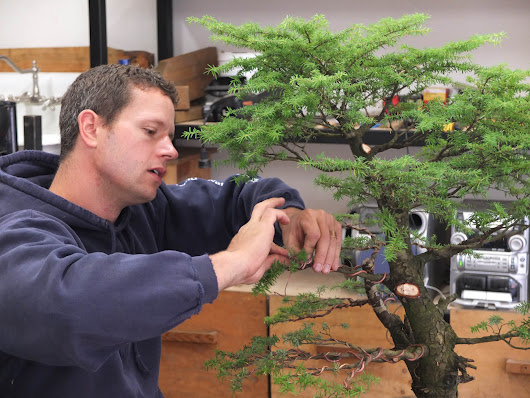 The Bonsai Kid - Craftsmanship Magazine