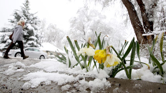 Gardening Etcetera: Maintaining your garden come rain, shine, or snow | Home and Garden |