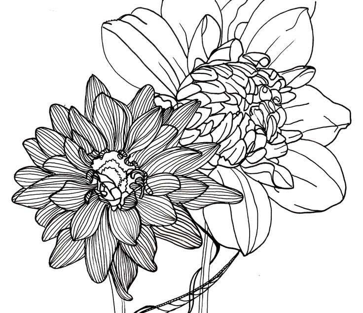 Free Line Drawing Of A Flower, Download Free Clip Art ...