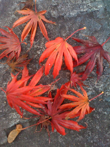 Japanese Maple Hands