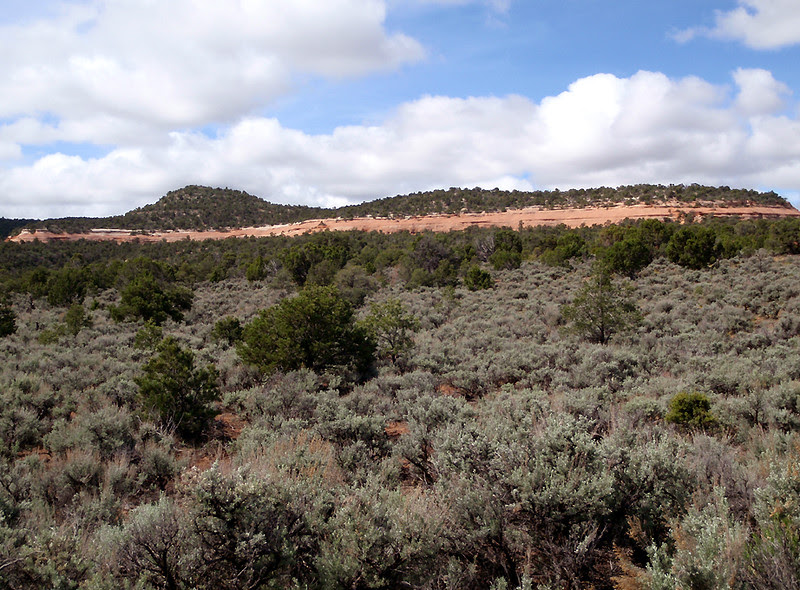 Upper elevations of sage, Colorado National Monument