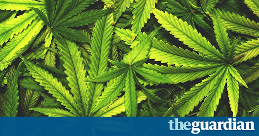 Epilepsy patients turning to medicinal cannabis, survey shows | Society | The Guardian