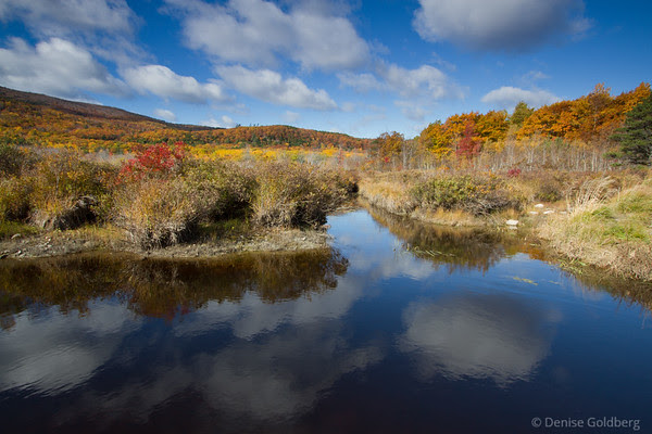 autumn colors, Acadia National Park
