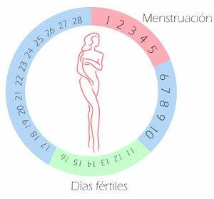 Puedes Estar Embarazada Y Reglar