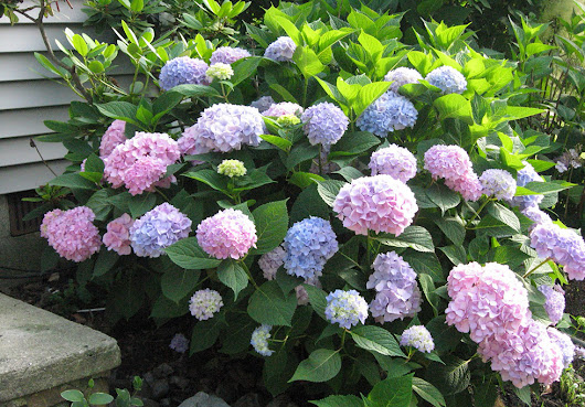 Top Curb Appeal Plants for Along Your Foundation
