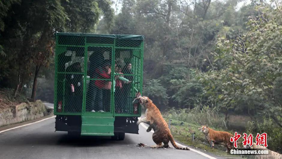 china-zoologico-animales-libres-2