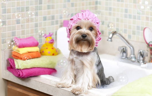5 Pieces of Advice on How to Groom a Dog | Lucky Dawg Salon Grooming in California