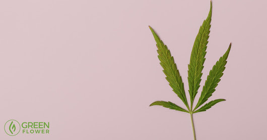 How Cannabis Treats Breast Cancer